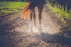 Brun häst i solljus Arkivfoto