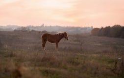 Brun häst på äng Royaltyfria Foton