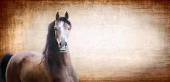 Brun häst på bakgrund med textur, baner Arkivfoto