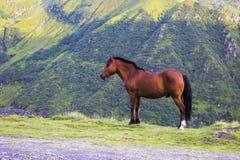 Brun häst på en bergsidosikt royaltyfri foto