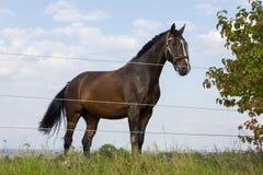 brun häst på en paddock fotografering för bildbyråer