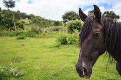 Brun häst som är utomhus- mot gröna träd arkivfoton