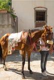 Brun hästkapplöpning Royaltyfria Bilder