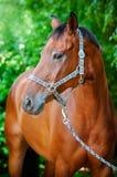 Brun häststående Arkivbild