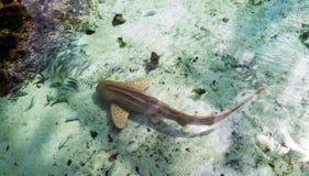 Brun haj med små fiskar under en ljus solig dag royaltyfria foton