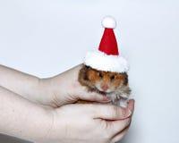 Brun hamster i locket av Santa Claus fotografering för bildbyråer