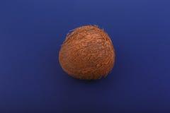 Brun hel hawaiansk kokosnöt, på ett mörker - blå bakgrund Närbild av den hela och ljusa bruna kokosnöten Hawaianska kokosnötter arkivfoton