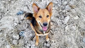 Brun hund på jordning Royaltyfria Bilder