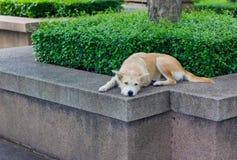 Brun hund som bort ser Arkivfoto