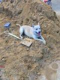 Brun hund som kopplar av i en hög av sand Arbete för konstruktionsplats arkivfoton