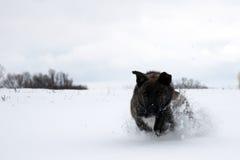 Brun hund utomhus i vinter Arkivfoto