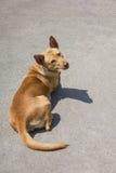 Brun hundsömn på cementet Royaltyfria Bilder