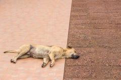 Brun hundsömn på jordningen Royaltyfria Foton