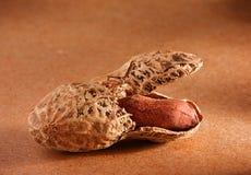 brun jordnöt royaltyfria bilder