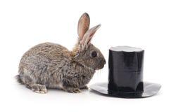 Brun kanin och cylinder royaltyfria foton