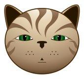 brun katt Royaltyfria Foton