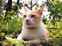 Brun katt i trädgården Arkivbild