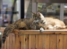 Brun katt som kopplar av på en sol i stången malta valletta Maltesisk katt Katt som kopplar av på en sol Fotografering för Bildbyråer