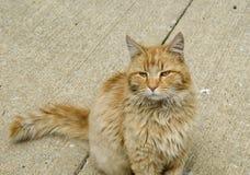 brun katt som ser sömnig royaltyfri foto
