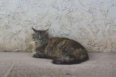 Brun katt som vilar på golvet Royaltyfri Bild