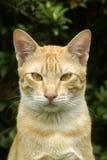 brun kattstående Arkivfoton
