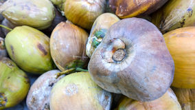 Brun kokosnöt Arkivfoton