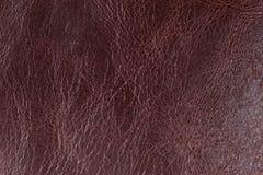 Brun läderbakgrund Fotografering för Bildbyråer