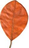 brun leaf Arkivfoto