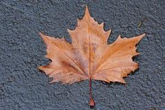 brun leave arkivfoto