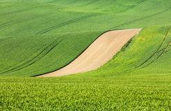 Brun linje mellan gröna fält Royaltyfria Foton
