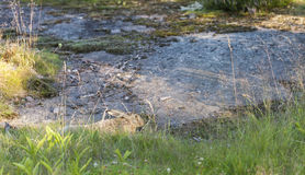 Brun lös kanin som ligger på jordningen Royaltyfri Bild