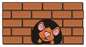 Brun mus som kikar ut från ett hål i väggen Royaltyfri Bild