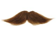 Brun mustasch som isoleras på vit royaltyfria bilder