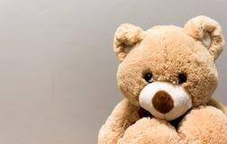 brun nalle för björn Arkivbilder