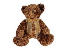 Brun nallebjörn med bandet arkivfoto