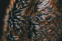 Brun naturlig pälstextur och bakgrund Naturlig djurhårbakgrund för design Slut upp av brun djur pälstextur Arkivfoton