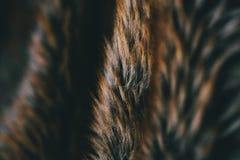 Brun naturlig pälstextur och bakgrund Naturlig djurhårbakgrund för design Slut upp av brun djur pälstextur Royaltyfri Fotografi