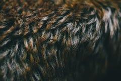 Brun naturlig pälstextur och bakgrund Naturlig djurhårbakgrund för design Slut upp av brun djur pälstextur Arkivbild