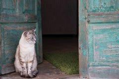 Brun och vit katt framme av gamla gröna trädörrar öppet Arkivbild