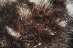 Brun pälsabstrakt begreppbakgrund Royaltyfria Bilder
