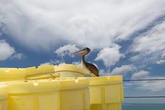 Brun pelikan på ett skepp Royaltyfri Fotografi