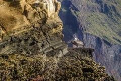 Brun pelikan på klippan Arkivfoton