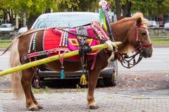 Brun ponny med vagnsbarnvagnen för barn i stadsgata Royaltyfri Foto