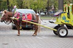 Brun ponny med vagnsbarnvagnen för barn i stadsgata Royaltyfri Bild