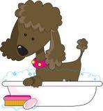 brun poodle för bad Royaltyfri Foto