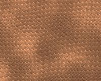brun reptilhud för bakgrund Royaltyfria Bilder