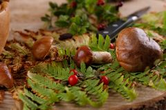 Brun soppchampinjon, större ätlig champinjon Champinjoner och växter på träbakgrund royaltyfri foto