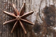 Brun stjärnaanis, östlig asiatisk krydda på wood bakgrund Royaltyfri Bild