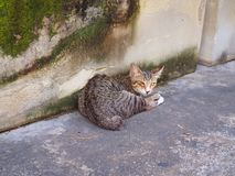 Brun svart sömn för kattunge för öga för bandmodellpäls en bredvid den växande väggen för mossa fotografering för bildbyråer