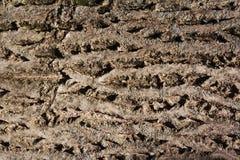 Brun tileable textur av det gamla trädet Sömlös bakgrund för trädskäll royaltyfri bild